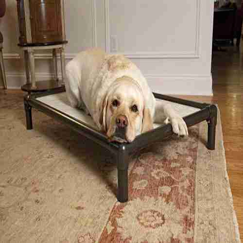 Best Dog Beds For Your Labrador 1 Top Water Bed