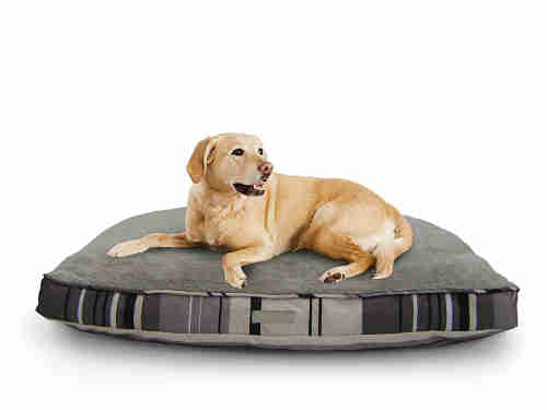 Best Dog Bed For Chewers 6 Indestructible Options