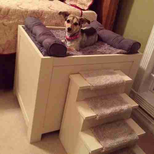 best elevated dog bed